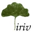 Iriv conseil (coordinateur du projet)